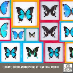 Collections – Natural History Direct - Shop the collection, website updated daily, click here now www.NaturalHistoryDirect.com