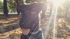 Avete tre opzioni indovinate da cosa era attratto: A) un biscotto  B) un biscottino C) due biscotti . . . #BauSocial #Milano #cane #cani #dog #dogs #mydog #dogoftheday #dogofinstagram #instadog #Bau #cookies  #autumn #parcosempione #sunset #sun milan #igersmilano #love #life