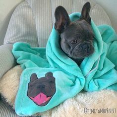 Custom French Bulldog Blanket, by Pride Bites, Image via Henry and Penny