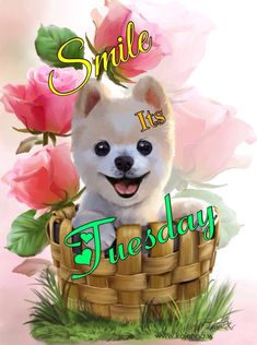 Tuesday, Teddy Bear, Toys, Fictional Characters, Animals, Art, Activity Toys, Art Background, Animaux
