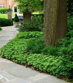 Liriope and Hosta. Landscape Hosta Design Ideas, Pictures, Remodel ...