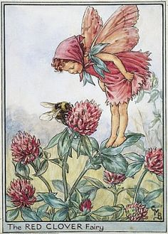 FLOWER FAIRIES/BOTANICALS: The Red Clover Fairy; This is an original vintage Cicely Mary Barker Flower fairies colour print. It is not a modern reproduction, approximate size x x 3 inches Cicely Mary Barker, Flower Fairies, Fairy Land, Fairy Tales, Vintage Prints, Vintage Art, Vintage Images, Vintage Sewing, Clover Flower