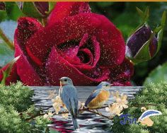 GIFS HERMOSOS: FLORES ENCONTRADAS EN LA WEB Vacaciones Gif, Les Gifs, Beautiful Gif, Beautiful Roses, Couple Silhouette, Flowers Gif, Bird Gif, Pretty And Cute, Inspirational Thoughts