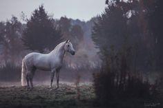 Carina Maiwald • Equine Photographer