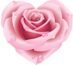 roza186.png