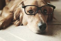 golden with glasses