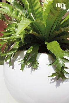 PREMIUM GLOBE by fleur ami Plant Leaves, Globe, Plants, Collection, Flowers, Speech Balloon, Plant, Planets