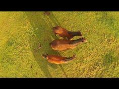 Yeguada (Stud Farm ) | videos desde otro punto de vista