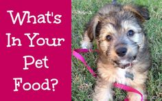 What's In Your Pet Food? - What to look for when choosing a food for your four-legged friend.