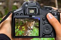 Safari Photography - tips and tricks for first-timers | Safari Photography Tips