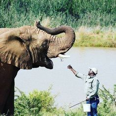 Feeling so much love for our Ellies at Askari Game Lodge & Spa ❤ Game Lodge, Game Reserve, So Much Love, Hotel Spa, How To Memorize Things, Wildlife, Elephant, Africa, Photo And Video