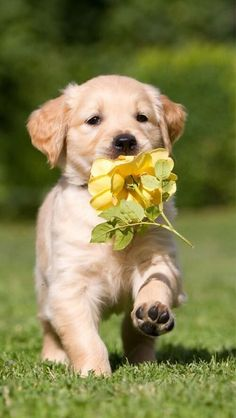 Cute Animals With Funny Captions, Cute Animals Puppies, Cute Puppies, Baby Animals, Dogs And Puppies, Funny Animals, Wild Animals, Retriever Puppy, Dogs Golden Retriever