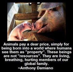 They have as much right as we do to share our planet. If we cannot be vegetarians, at least defend their basic rights. They deserve a proper living condition and decent treatment, just like any living creatures. Public must start giving voices to this issues.