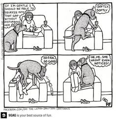 off the leash daily dog cartoons (facebook page)