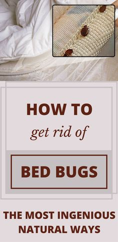 Do you have cats or puppies at home and you do not know how to get rid of bed bugs? They are a serious problem and you need to learn to get rid of them. Baking Powder Uses, Baking Soda Uses, Cleaning Solutions, Cleaning Hacks, Bed Bugs Essential Oils, Arm And Hammer Baking Soda, Rid Of Bed Bugs, Clean Stove Top, House Insects