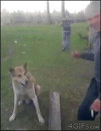A GIF of a Dog Shaking Hands That Will Make Your Precious Day from GifGuide
