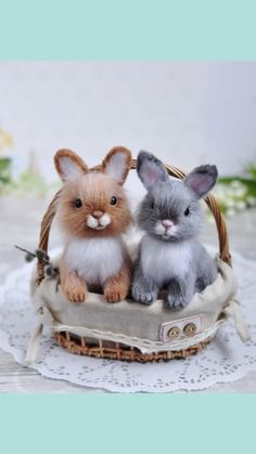 Little Pet Shop Toys, Little Pets, Cute Baby Bunnies, Cute Baby Animals, Cute Bunny Pictures, Baby Hamster, Bunny Cages, Grey Bunny, Crochet Bunny Pattern