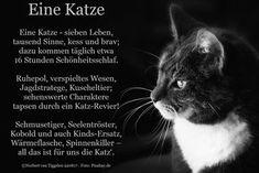 Schwarze Fette Muschi-Katze