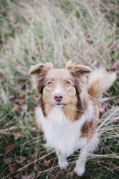 Willow & Co. | Sydney Pet Photographer