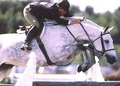 Rox Dene. One of the true stylists in the show hunter ring. One of the all time best mares ever!!!!