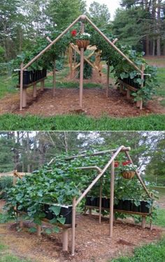 Expert Gardening Tips, Ideas and Projects that Every Gardener Should Know Neat idea! -- Build a trellis out of PVC pipes. -- Build a trellis out of PVC pipes. Diy Gardening, Hydroponic Gardening, Organic Gardening, Container Gardening, Balcony Gardening, Texas Gardening, Rooftop Garden, Flower Gardening, Garden Types