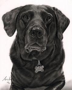 Commission - Black Labrador by Captured-In-Pencil on @DeviantArt