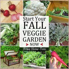 Start Your Fall Veggie Garden NOW - Free how-tos to get started via empressofdirt #spon