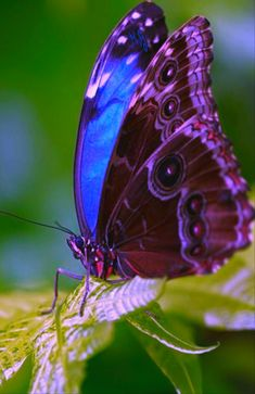 Butterfly On Flower, Butterfly Photos, Butterfly Crafts, Butterfly Kisses, Butterfly Meaning, Most Beautiful Butterfly, Volkswagen Up, Purple Love, Cute Creatures