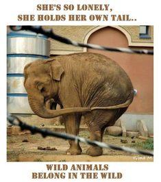 Elle se sent tellement seule, qu'elle tient sa propre queue. Pas d'esclaves animaux dans les cirques !