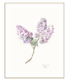 Art par Catalina mural lilas PRINT - lilas violet fleur aquarelle et crayon dessin - imprimé floral moderne - lilas