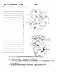 Animal cell coloring key science cells pinterest science cells the test has 88 questions ccuart