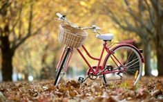 Street Bike Autumn Leaves Background Desktop