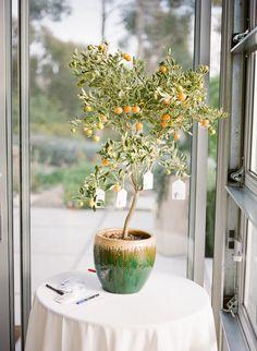 orange tree used for wishing tree tree