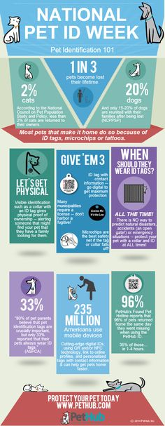 National Pet ID Week -- A Graphic to Show Why Your Pet Needs an ID | PetHub