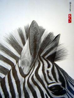 'zebra close up'