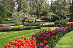 Great view of Keukenhof at peak blooming  #travel to the #tulipsinholland spring 2018 http://tulipsinholland.com/2016/11/when-are-the-tulips-in-bloom-in-2017/?utm_content=bufferc3df1&utm_medium=social&utm_source=pinterest.com&utm_campaign=buffer