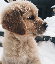 Golden Retriever Puppies Golden Retriever puppy playing in the snow Cute Dogs And Puppies, Baby Dogs, I Love Dogs, Doggies, Puppies Puppies, Adorable Puppies, Funny Puppies, Cute Puppy Pics, Cute Pets
