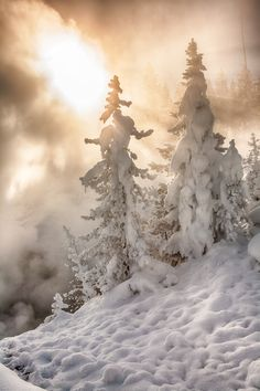 Early morning in Yellowstone National Park  #winter snow sun frosty
