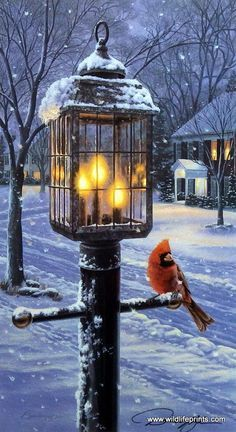 A lone cardinal seeks warmth under a nostalgic street lamp. This is the first print in Darrell Bush's winter bird series Warmth of Winter. This print comes in two unframed sizes with two different sig
