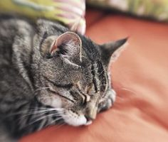 How to keep a senior cat active and comfortable via @D R. Marty Becker.