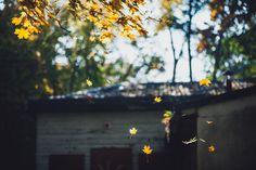 Leaves #286/365 [Explored] | by A. Aleksandravičius
