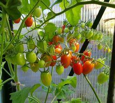 Hekkplanter for enhver smak, her er mine forslag. Slik, Planters, Stuffed Peppers, Vegetables, Gardening, Garden Ideas, Outdoors, Food, Veggies