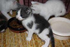 cute kitten heart marktings cat pic