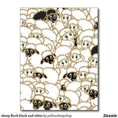 sheep flock black and white postcard