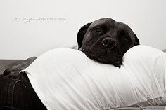 Maternity photography with dog. I really think this is sweet #PregnancyPhotography