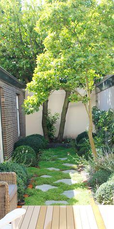 Een groen stilleven Voor deze stadstuin in de buurt van het Zeeheldenkwartier in Den Haagis een tuinontwerp op maat gemaakt. Deze tuin word gekenmerkt door de langwerpige vorm en de Magnoliaachter in de tuin. In het ontwerp zijn deze kenmerken benadrukt door de lange lijnen naar achter in de tuin aan te zetten met twee …