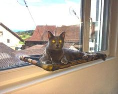 Greys Curious Cats Window Perch by JennGv on Etsy