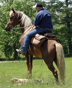 Easy-Gaited Trail Horses For Sale - Are YOU Ready to Ride!