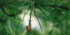 Snail climbing plant
