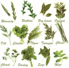 Common herbs used in Italian Cooking